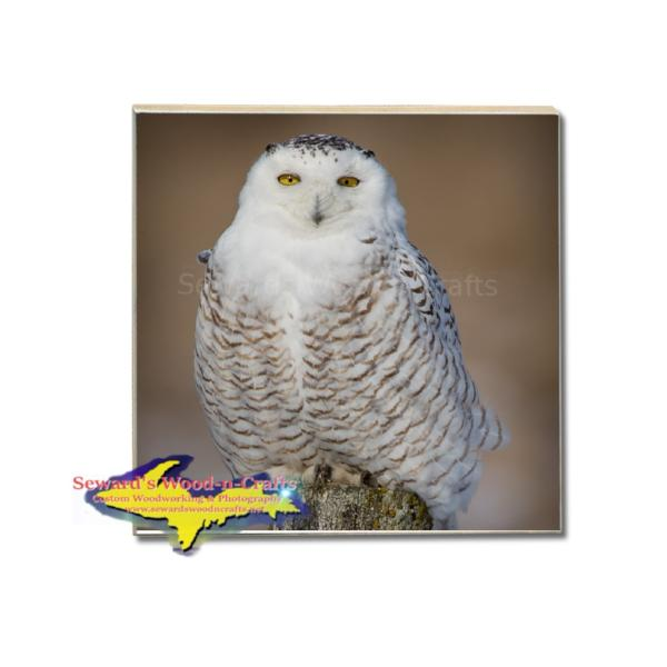 Wildlife Drink Coaster Snowy Owl Build Your Own Coaster Set With These Vivid Coasters