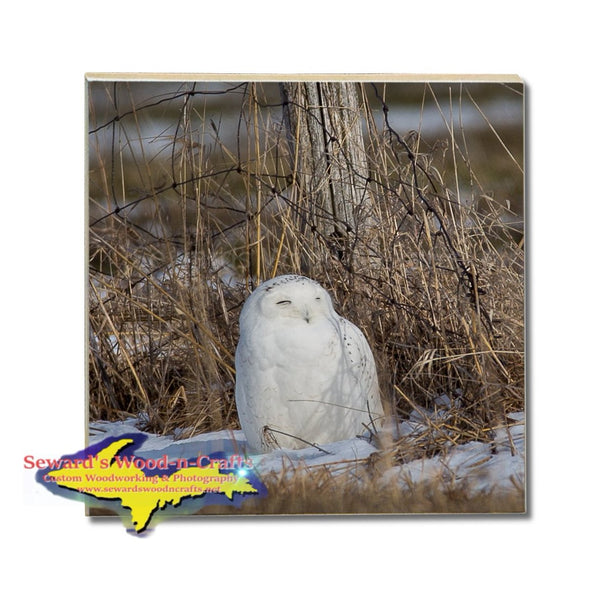 Michigan Drink Coasters Wildlife Snowy Owl Michigan Made Gifts