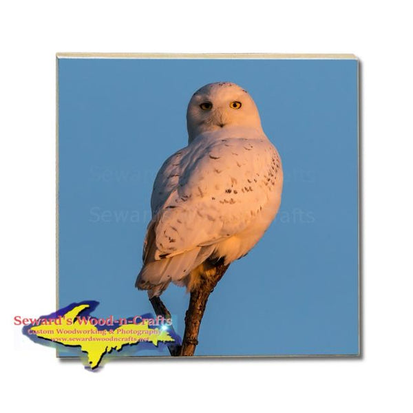 Michigan Made Drink Coasters Snowy Owl Wildlife Gifts & Collectibles