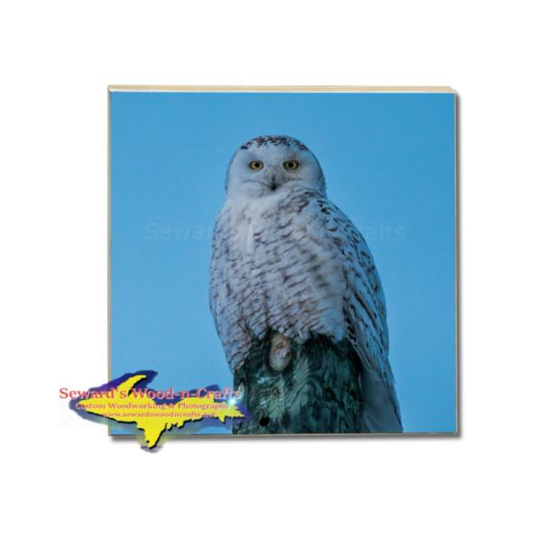 Wildlife Tile Drink Coaster Snowy Owl Coasters & Trivets Best Prices