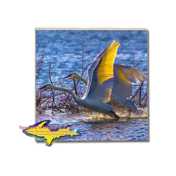 Swans at Seney National Wildlife Refuge Michigan Made Drink Coasters