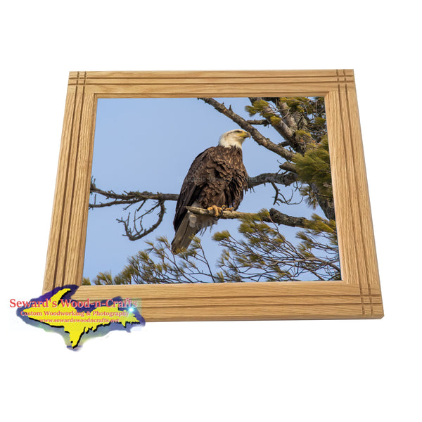 Michigan's Upper Peninsula Wildlife Framed Photo Eagle Wall Art Home Decor