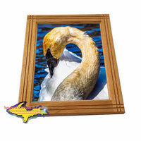 Trumpeter Swan Seney National Wildlife Refuge Framed Photo Wall Art