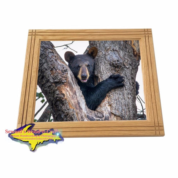 Wildlife Bear Cub Framed Photo For Home Cabin Decor