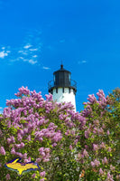 Lighthouse Point Iroquois Spring Lilacs Photo Michigan Photography Upper Peninsula Images