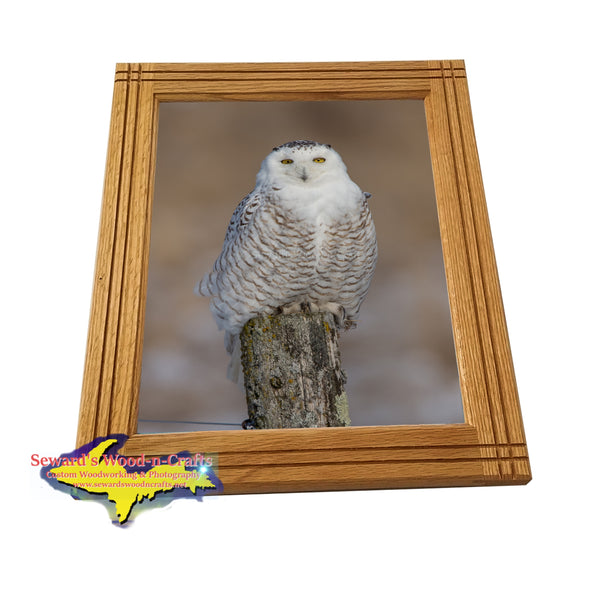 Michigan's Upper Peninsula Wildlife Snowy Owl Pictures For Yooper Gifts