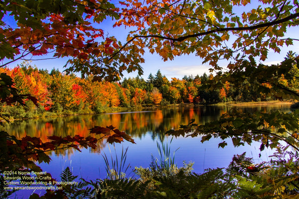 Roxbury Pond Autumn Colors Brimley Michigan Photos