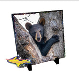 Wildlife Bear Cub-1260 ~ Michigan Photo Tiles, Slate, & Gifts
