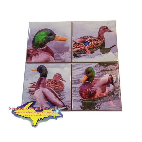Michigan Coasters Mallard Ducks Michigan  Wildlife Coasters