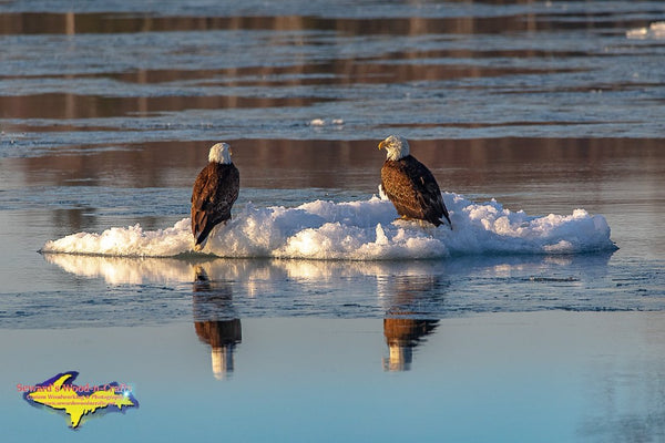 Michigan Photography Wildlife Eagles On Ice Pictures For Home And Office Decor