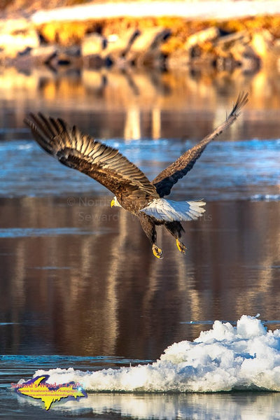 Michigan Wildlife Photography Eagle In Flight Wildlife Home Office Decor