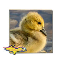 Michigan Made Drink Coaster Wildlife Gosling Best Nature Gifts