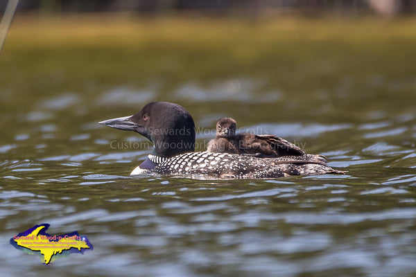Michigan Upper Peninsula Photography Wildlife Common Loon Photo Best prices on prints & Canvas