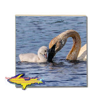 Michigan Made Wildlife Coaster Swan & Cygnet Wildlife Gifts & Collectibles