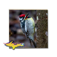 Michigan Made Coaster Wildlife Yellow Bellied Sapsucker