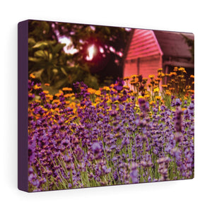 Morning Meadow Canvas Gallery Print