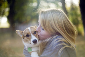 7 Things Only Pembroke Welsh Corgi Owners Will Understand