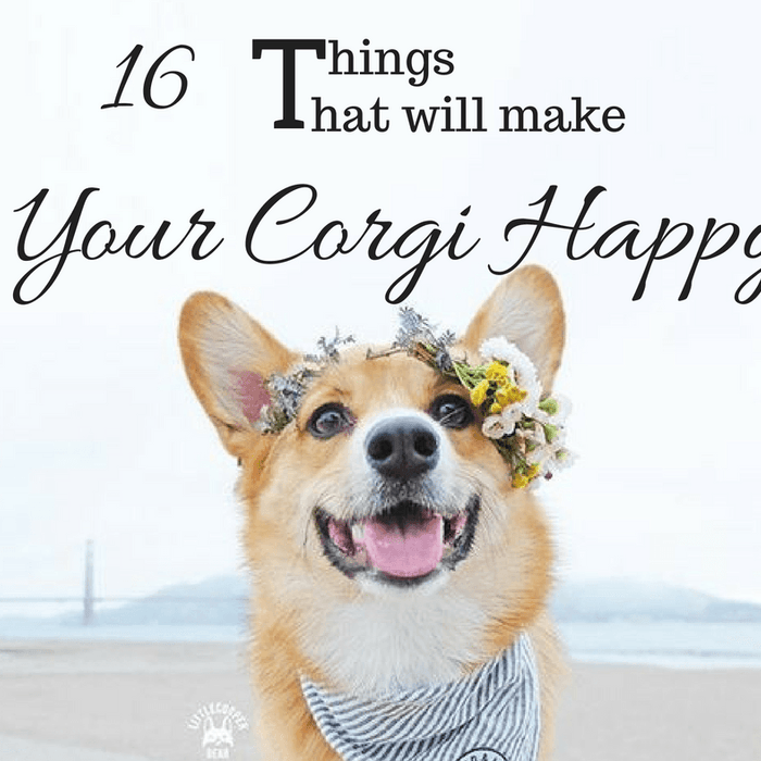 16 Things That Will Make Your Corgi Happy