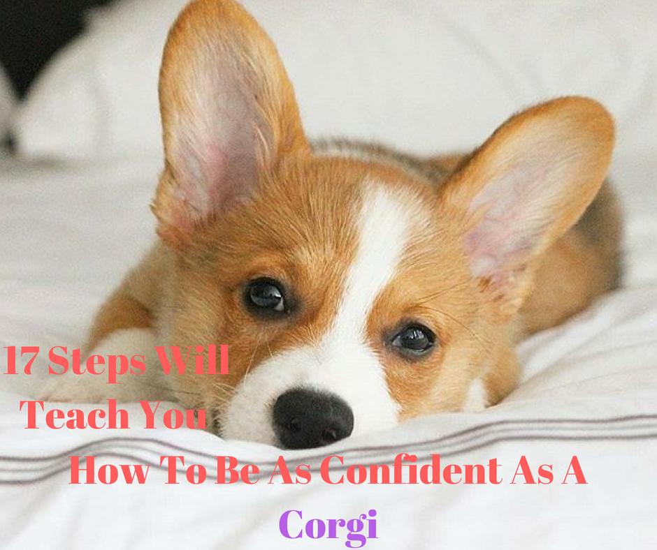 17 Steps Will Teach You How To Be As Confident As A Corgi