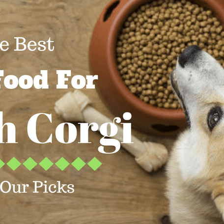 The Best Dog Food For Welsh Corgi 2018: Our Top 5 Picks