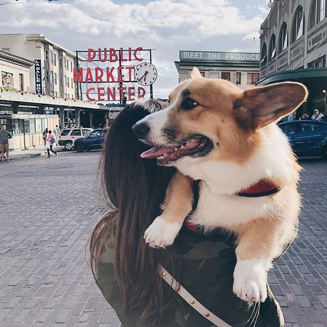 Corgi lovers