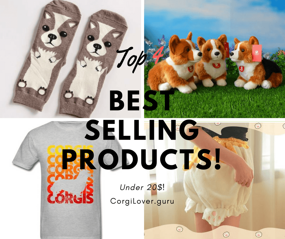Best products for corgi under 20$
