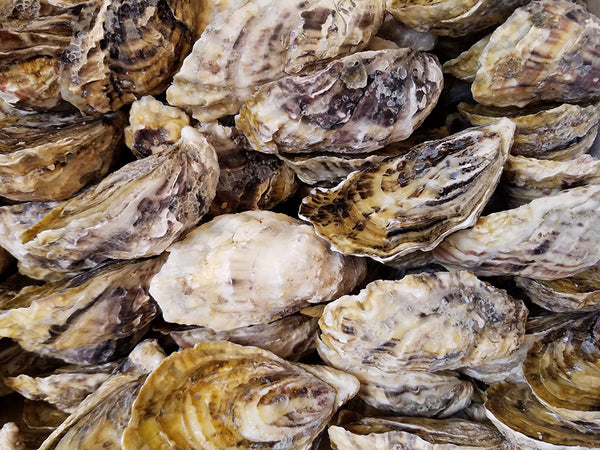 DIBBA BAY OYSTERS #3 (65/85g): 12 PIECES