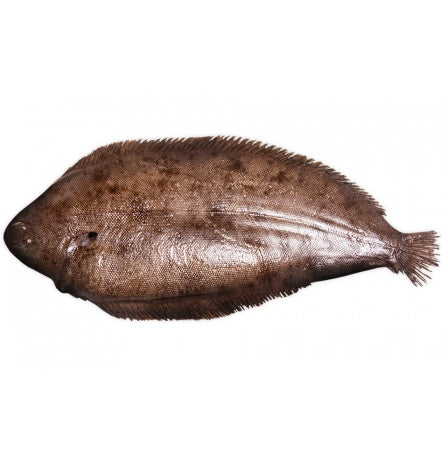 DOVER SOLE - WHOLE FISH