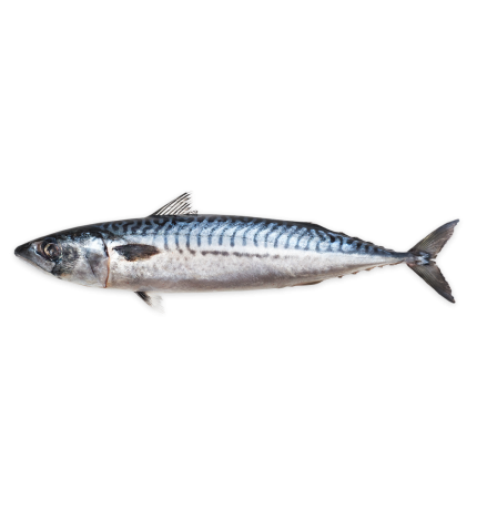 MACKEREL - WHOLE FISH