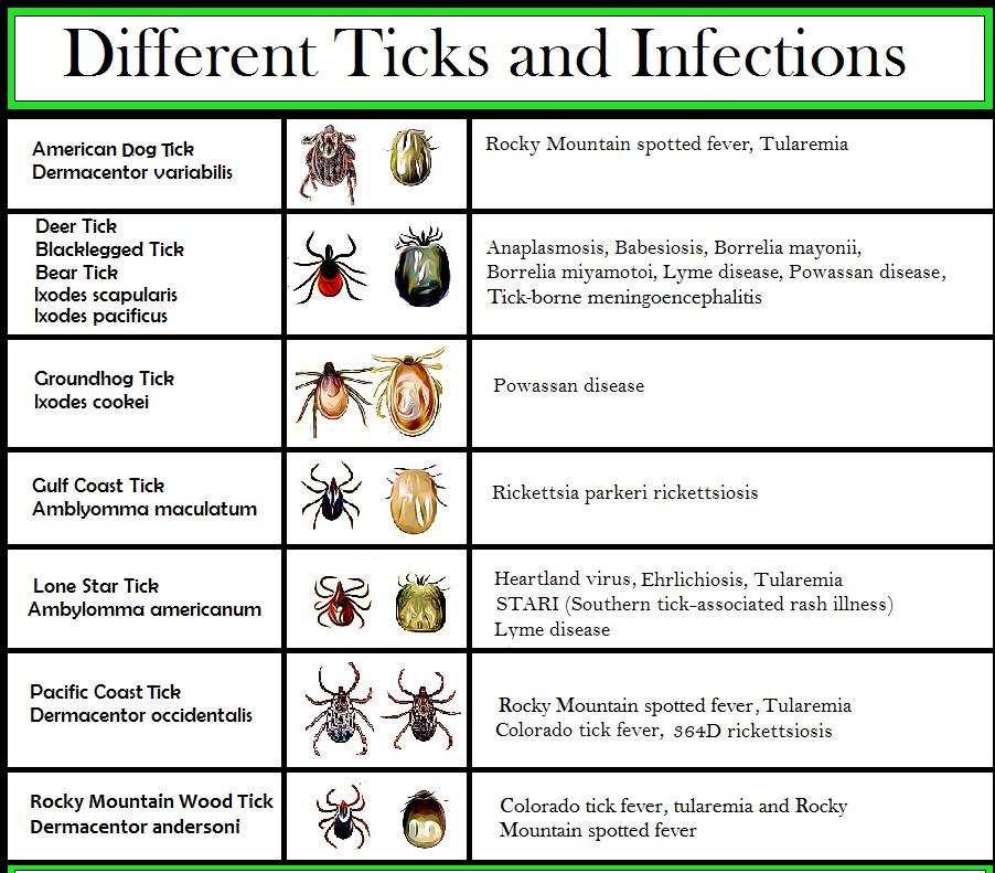 Tick Identification