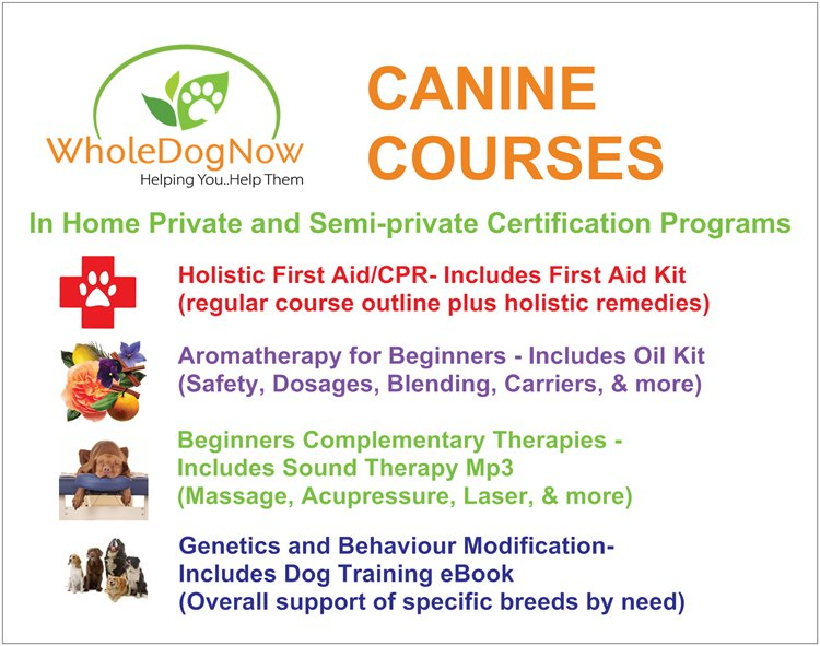 Courses Certificates Pet First Aid Cpr Peterbrough Ontario Kawartha