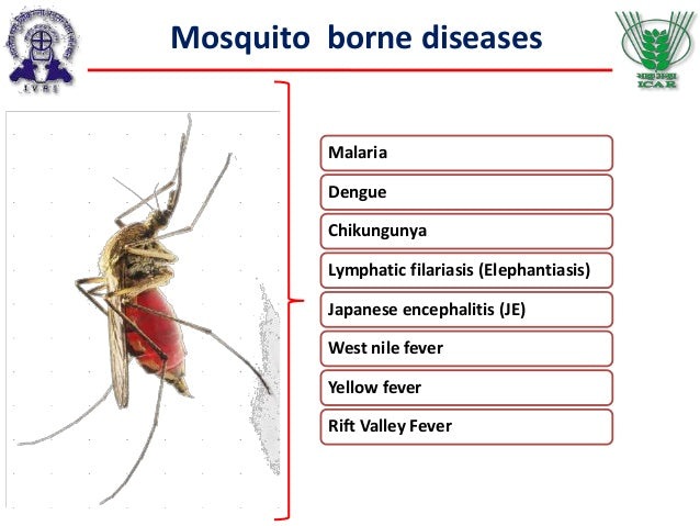 list of diseases that mosquitoes carry