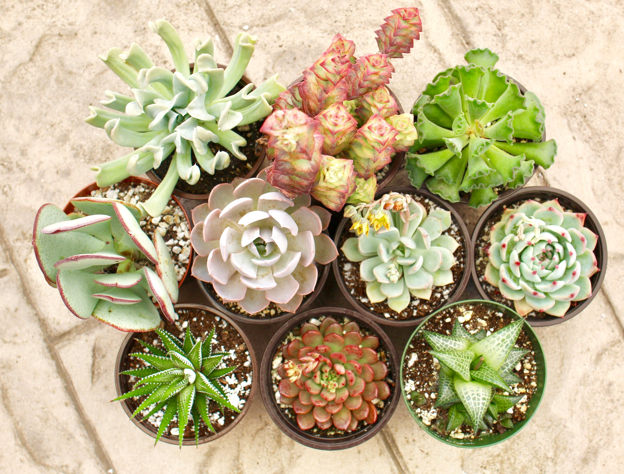 10 Easy Succulents To Grow Succy Crafts