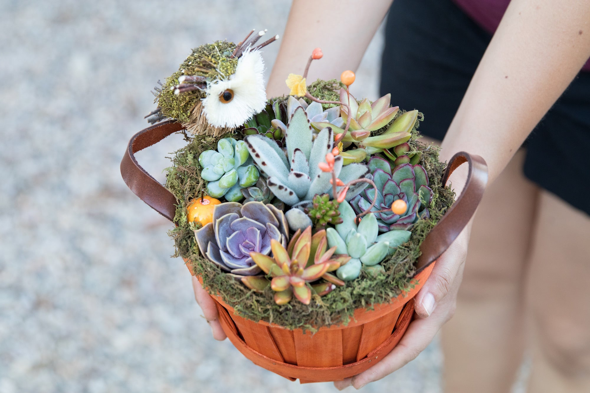 succulents in a basket diy