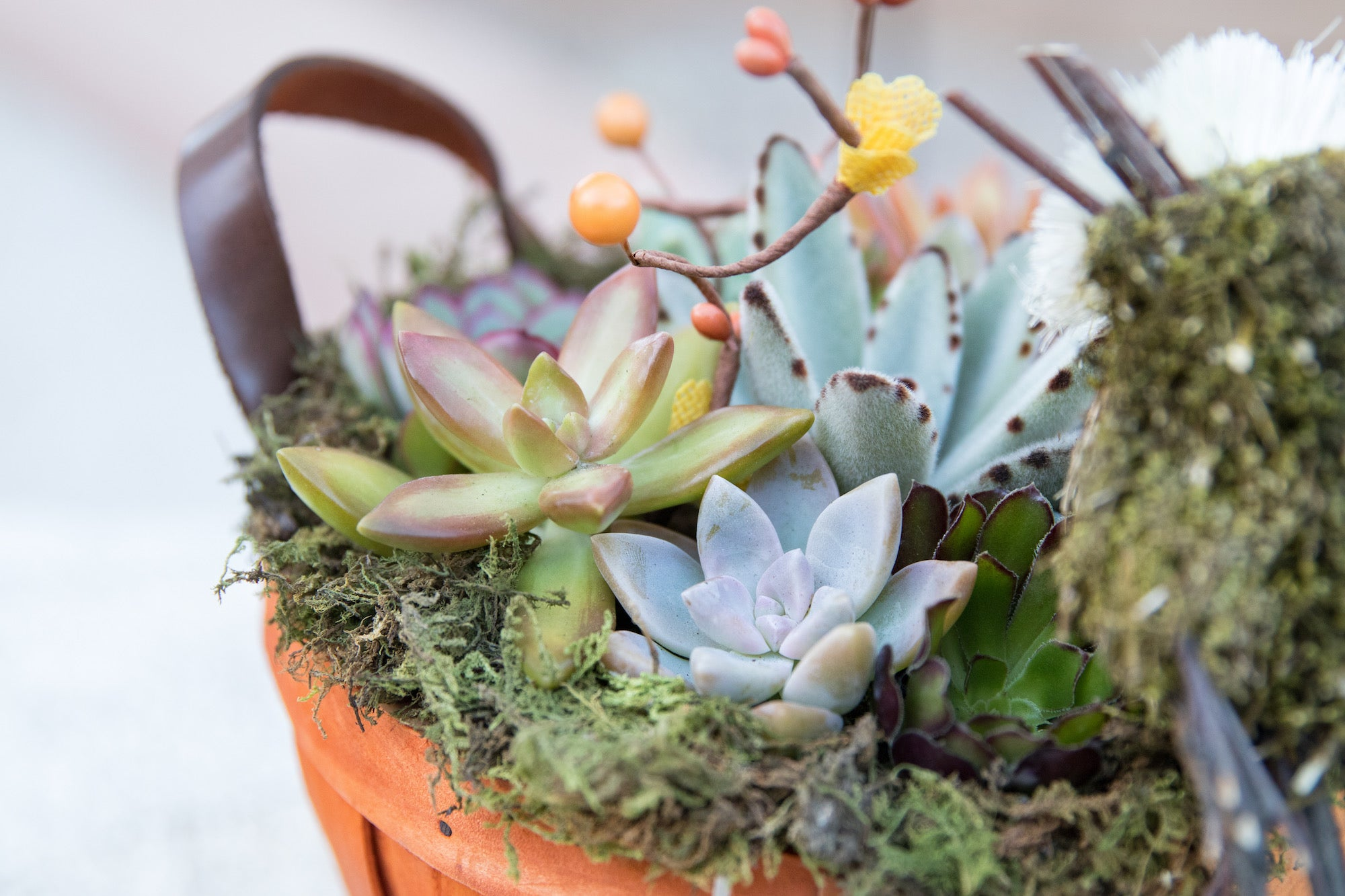 basket with succulents DIY by succy crafts