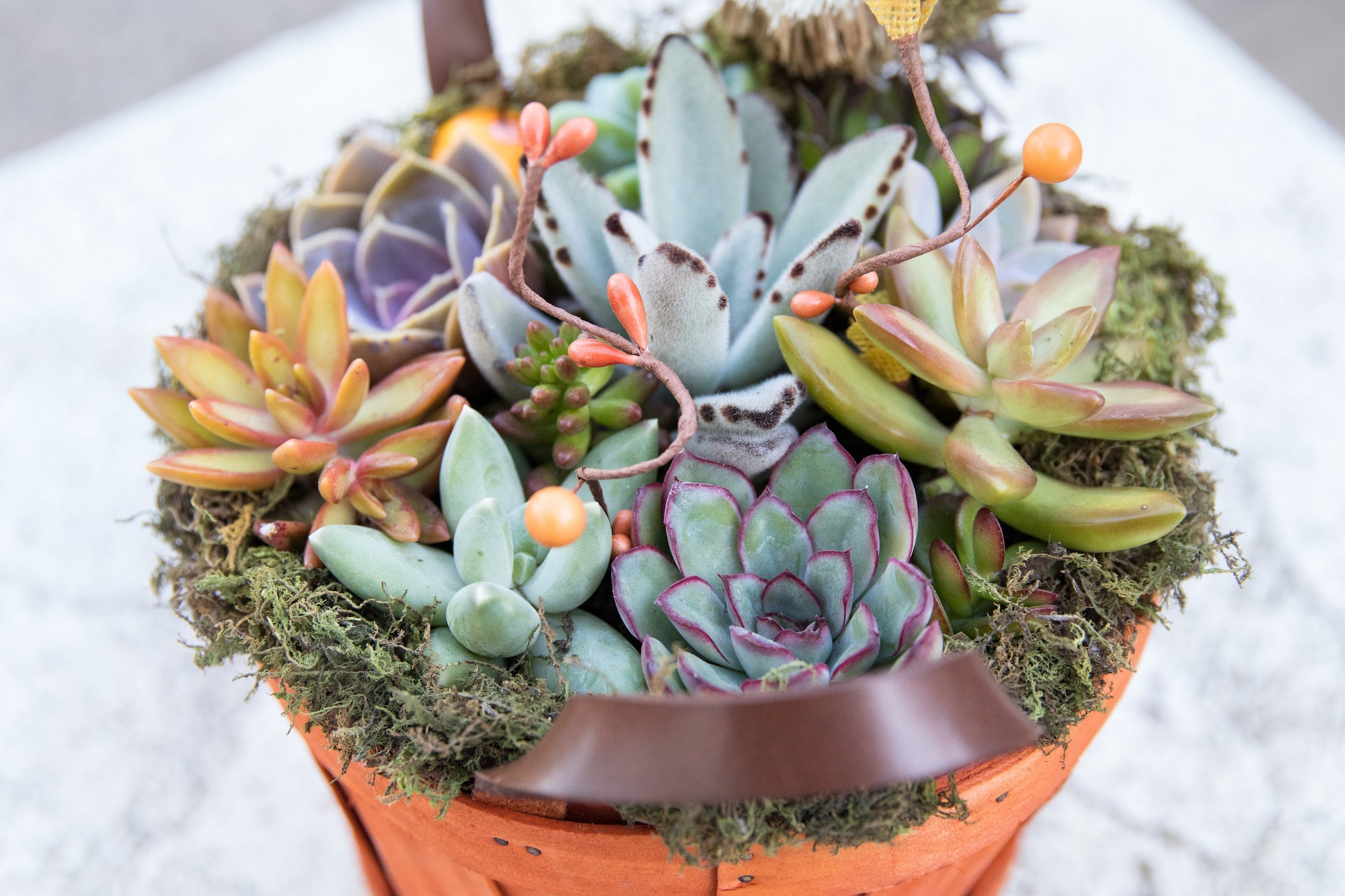simple DIY with succulents by succy crafts