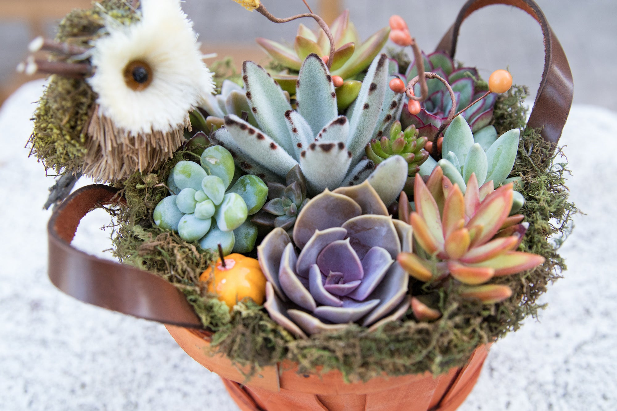 simple succulent DIY by succy crafts