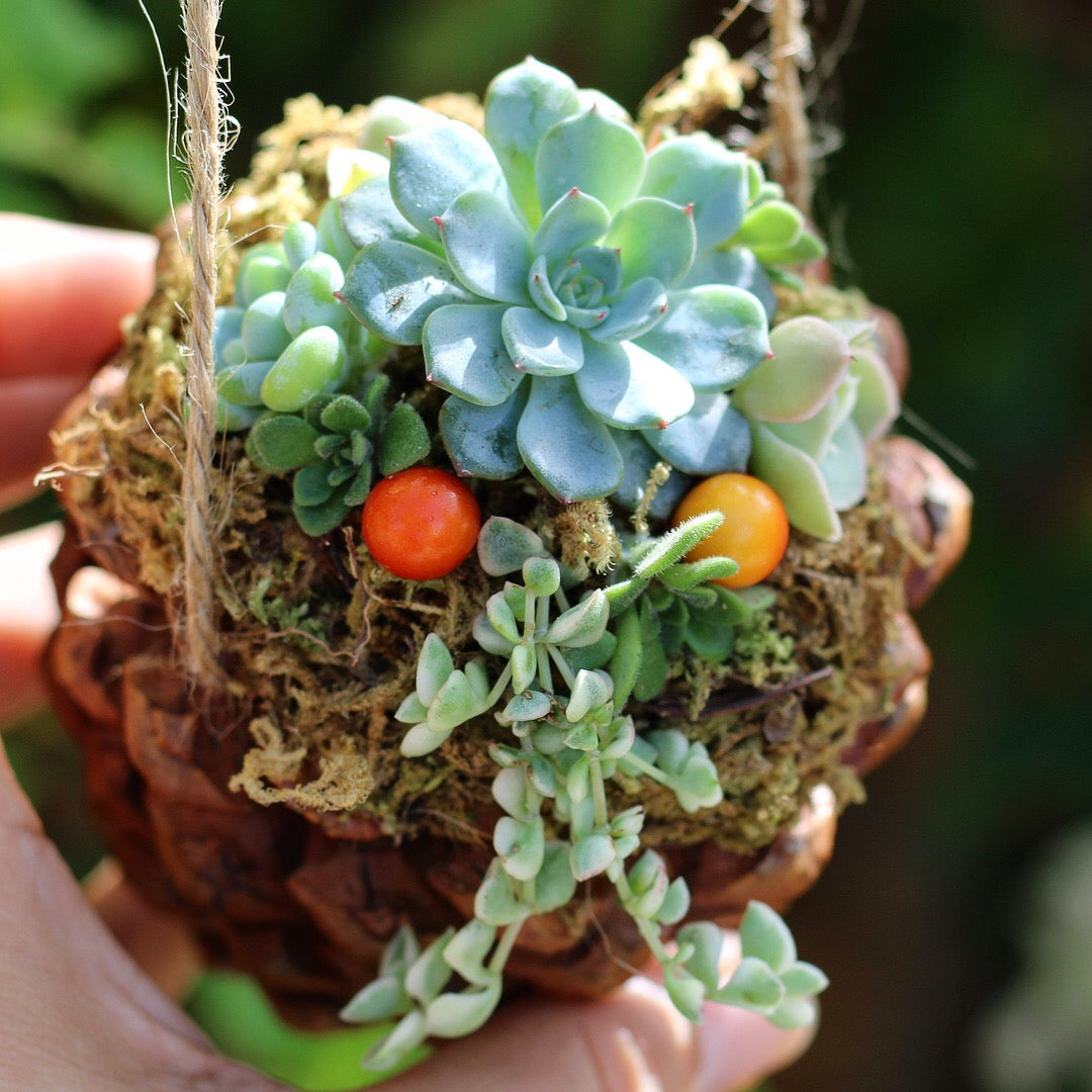 DIY succulent pinecone by succy crafts