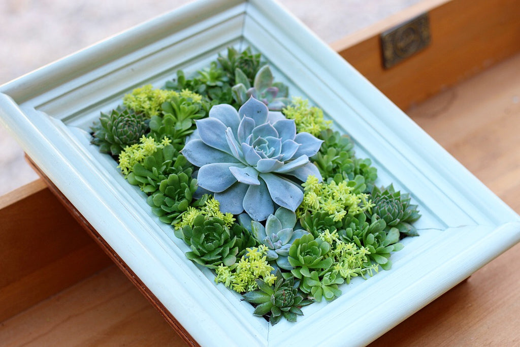 Living Succulent Photo Fram DIY Guide