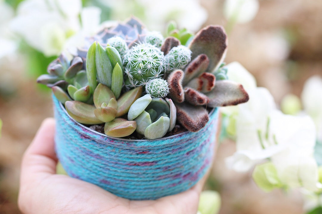 Succulent plant shelf DIY by succy crafts