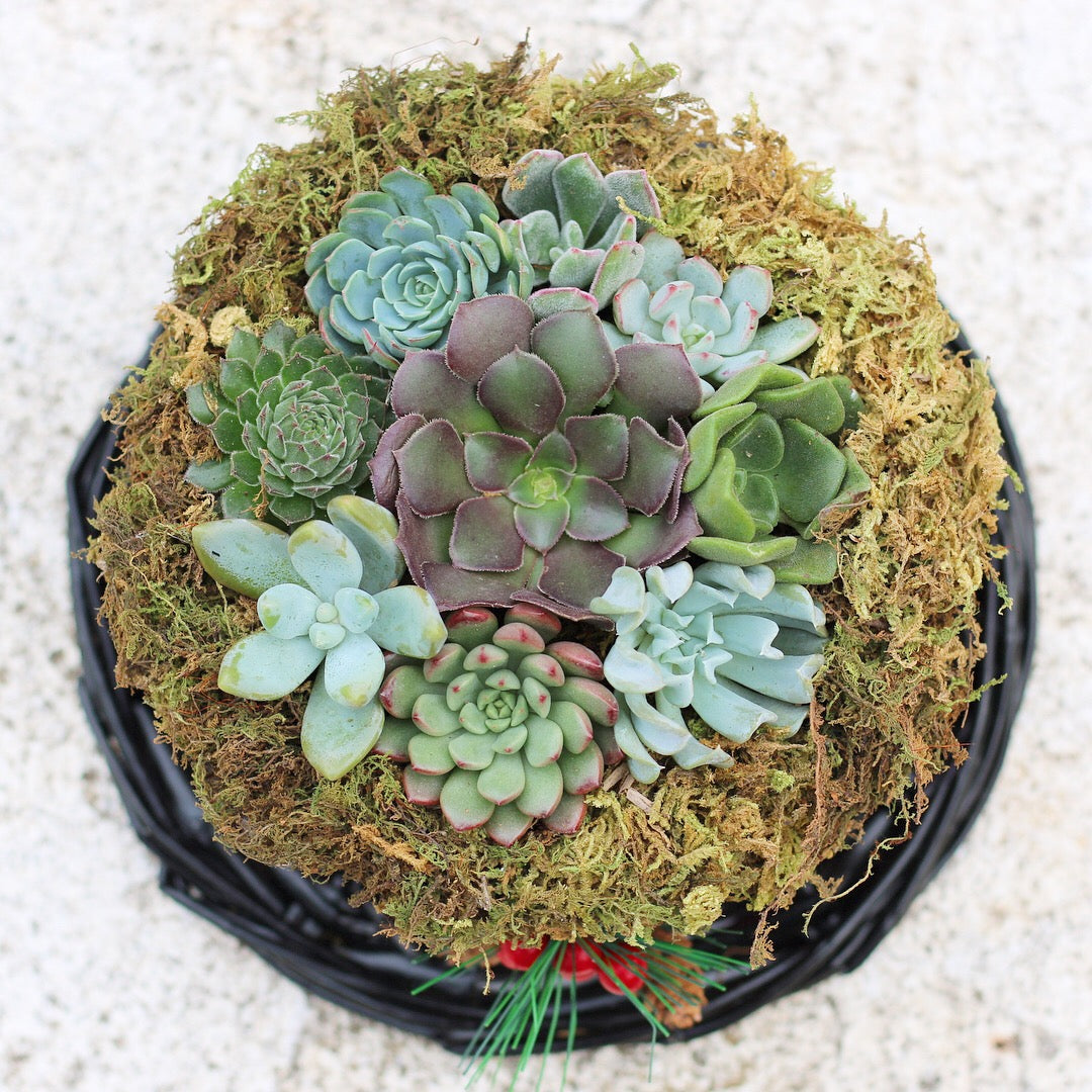 christmas DIY with succulents by succy crafts