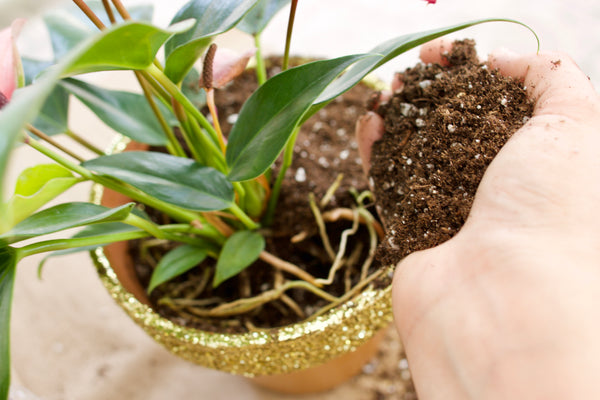 glitter pot diy anthurium
