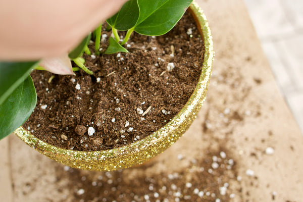 glitter pot diy anthurium 2