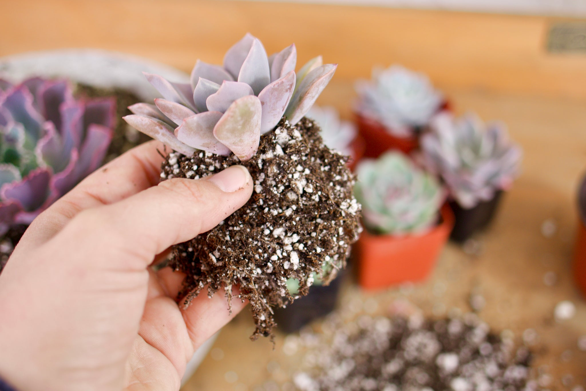 DIY with succulents by succy crafts