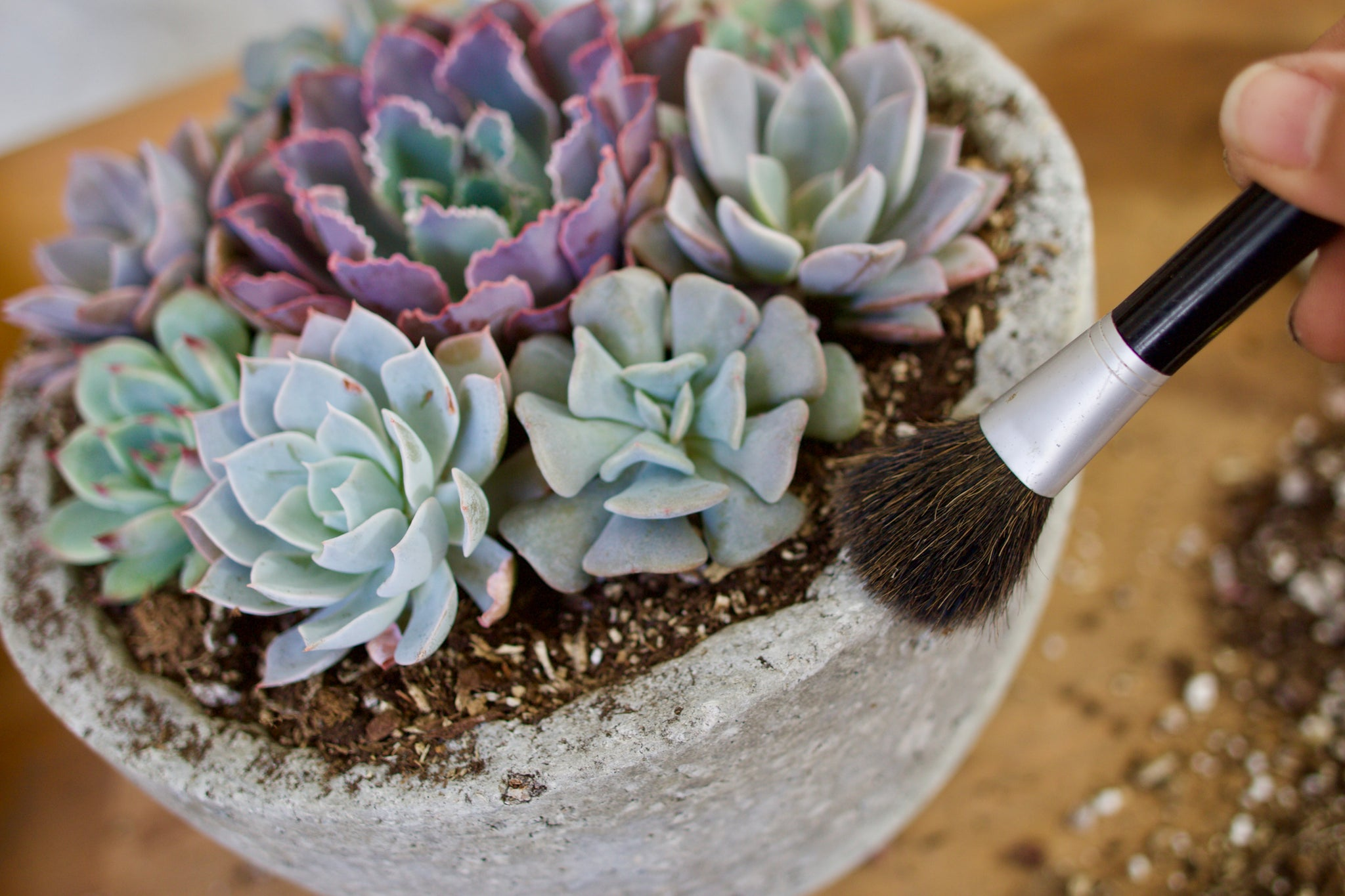 How To Arrange Succulents Succy Craft Style