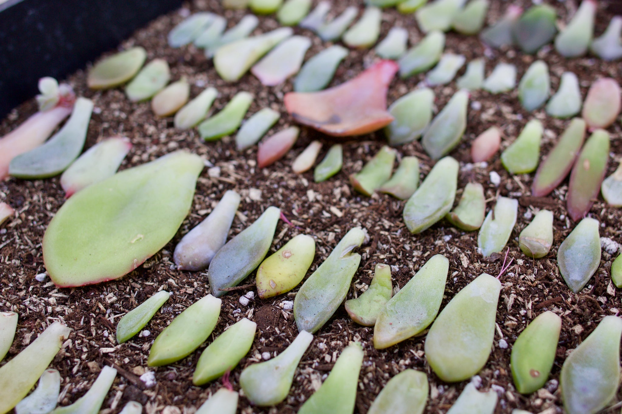 propagating DIY by succy crafts