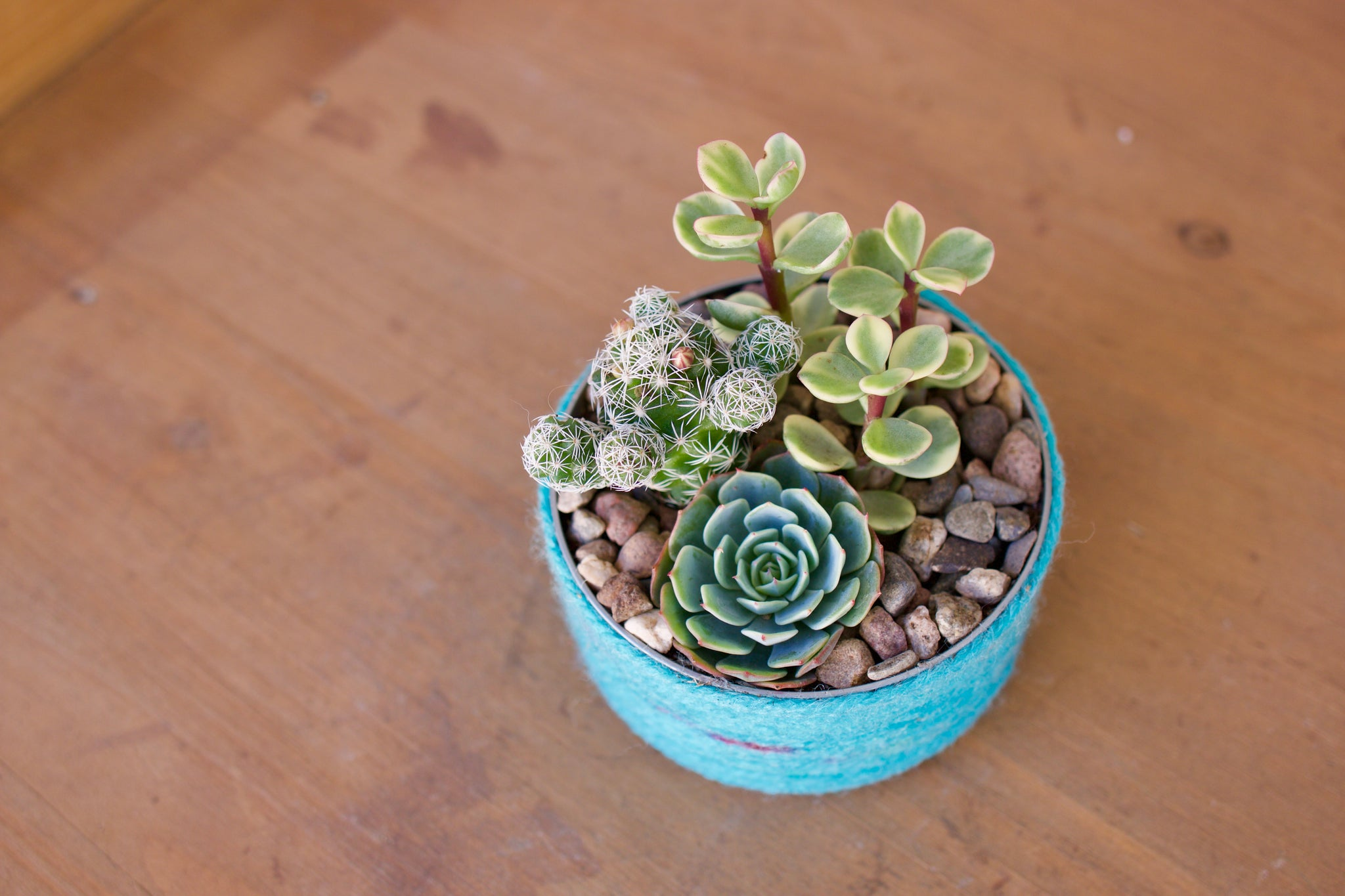 succulent craft in a tin can by succy crafts