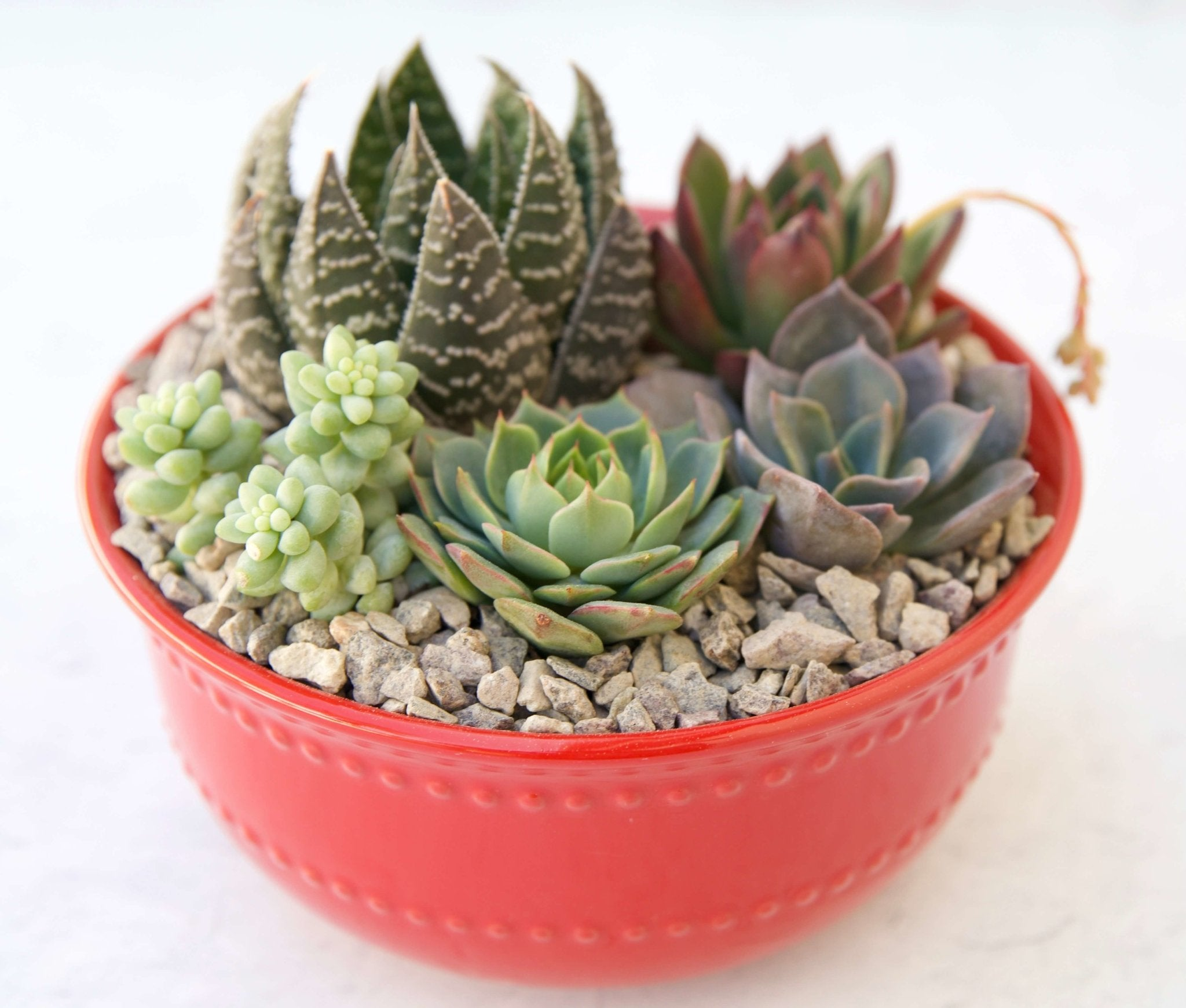 Succy Bowl Container