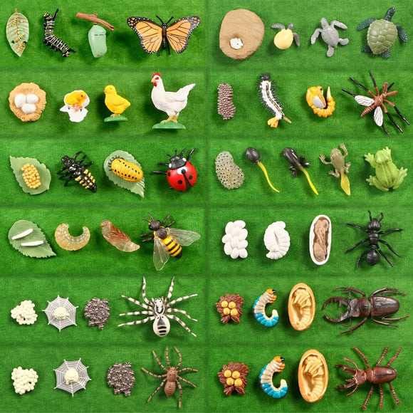 Simulation Animals Growth Life Cycle Models Figure Educational Toy