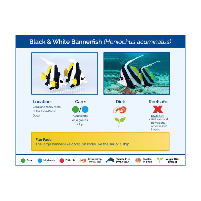 Black & White Bannerfish x 2 - Flow Connection
